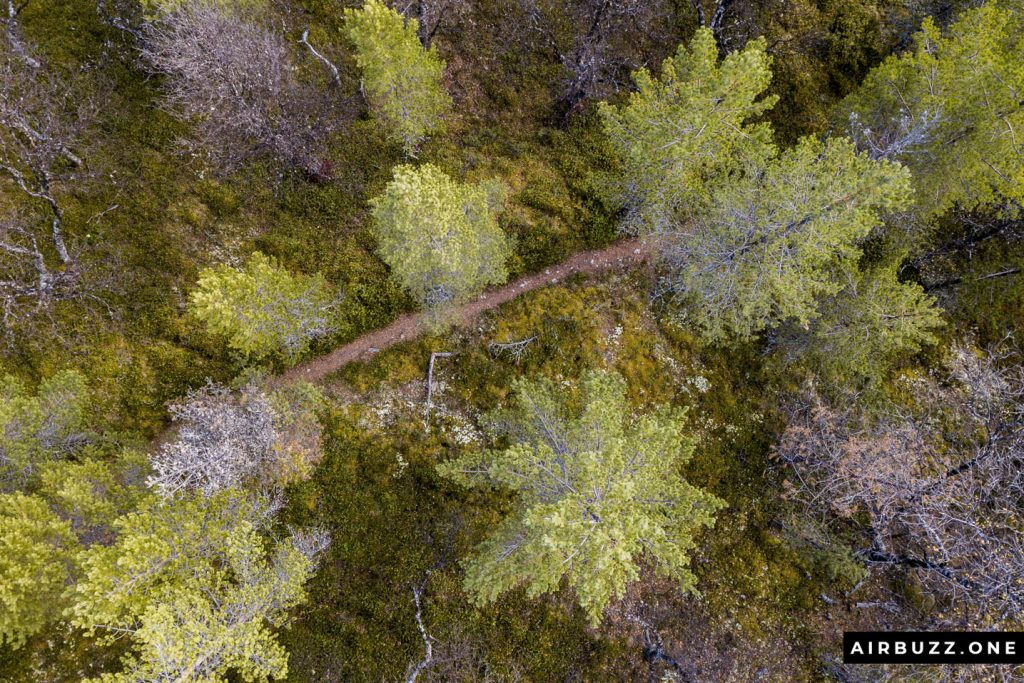 Top-down shot from the local forest.