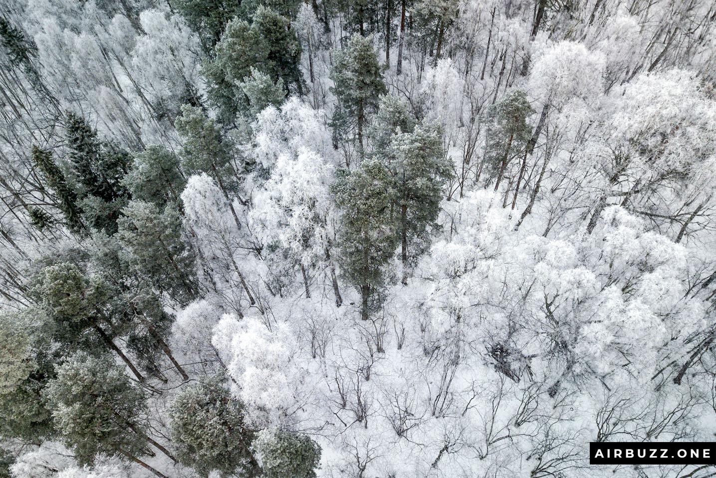 Random snow covered trees.