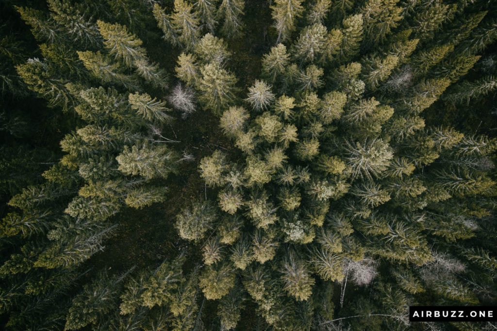 "I had to take another classic ""forest from above"" picture."